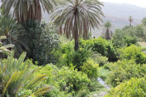Un jardin oasis